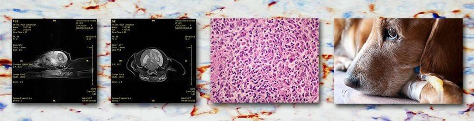 TERAPIA-CANCER-PERRO-CLINICA-VETERINARIA-SON-DURETA