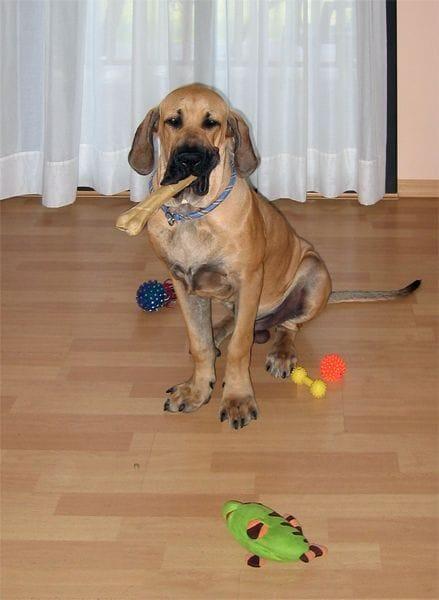 El cachorro necesita tener sus juguetes