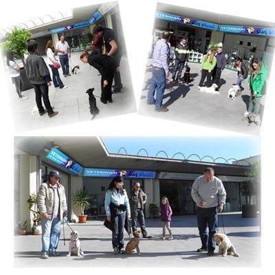 Curso de socialización de cachorros en grupos homogéneos y reducidos