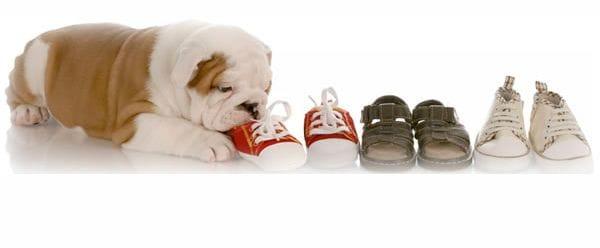 Curso socializacion de cachorros
