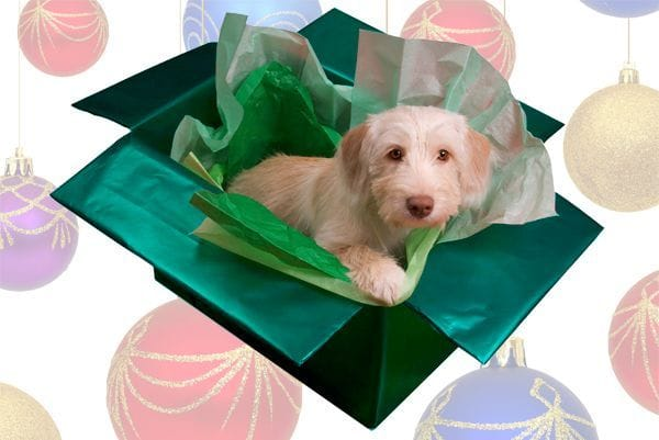 Perro regalo de navidad