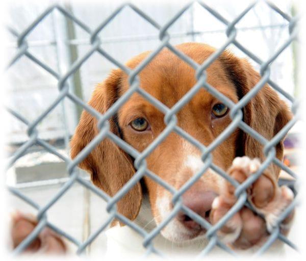 Muchos perros esperan ser adoptados