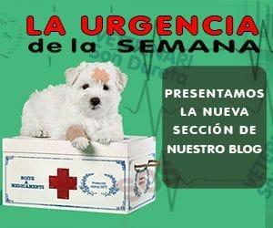 Urgencia de de la Semana del servicio de urgencias veterinarias de la clínica veterinaria Son Dureta
