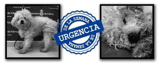 La historia de Marcos en el servicio de Urgencias veterinarias 24 horas de la Clínica Veterinaria Son Dureta