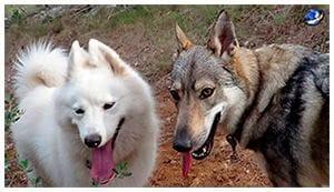 Duna y Nara, las dos perras son de la misma familia clientes de la Clínica Veterinaria Son Dureta