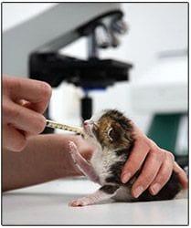 Alimentando un gatito recién nacido