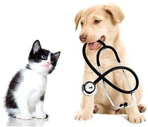 Resultado de imagen de vacunacion cachorros